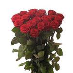 Розы на привозе смоленск каталог цены